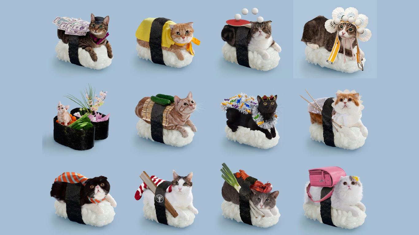 free download sushi cat