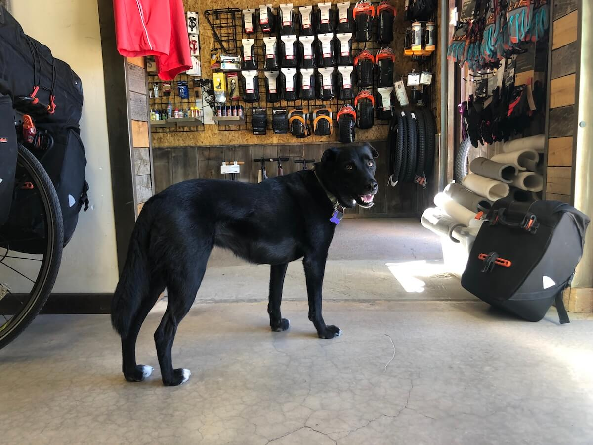 zion cycles springdale dog